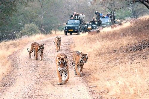 jungle safari india