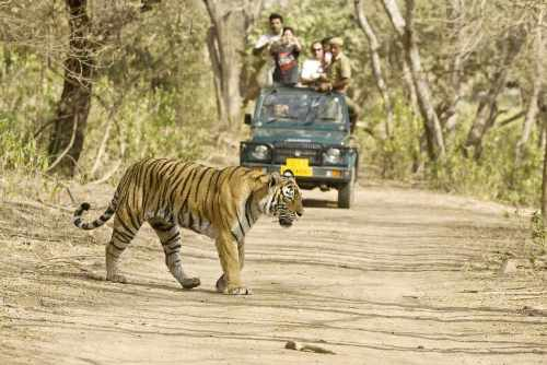 tiger safari